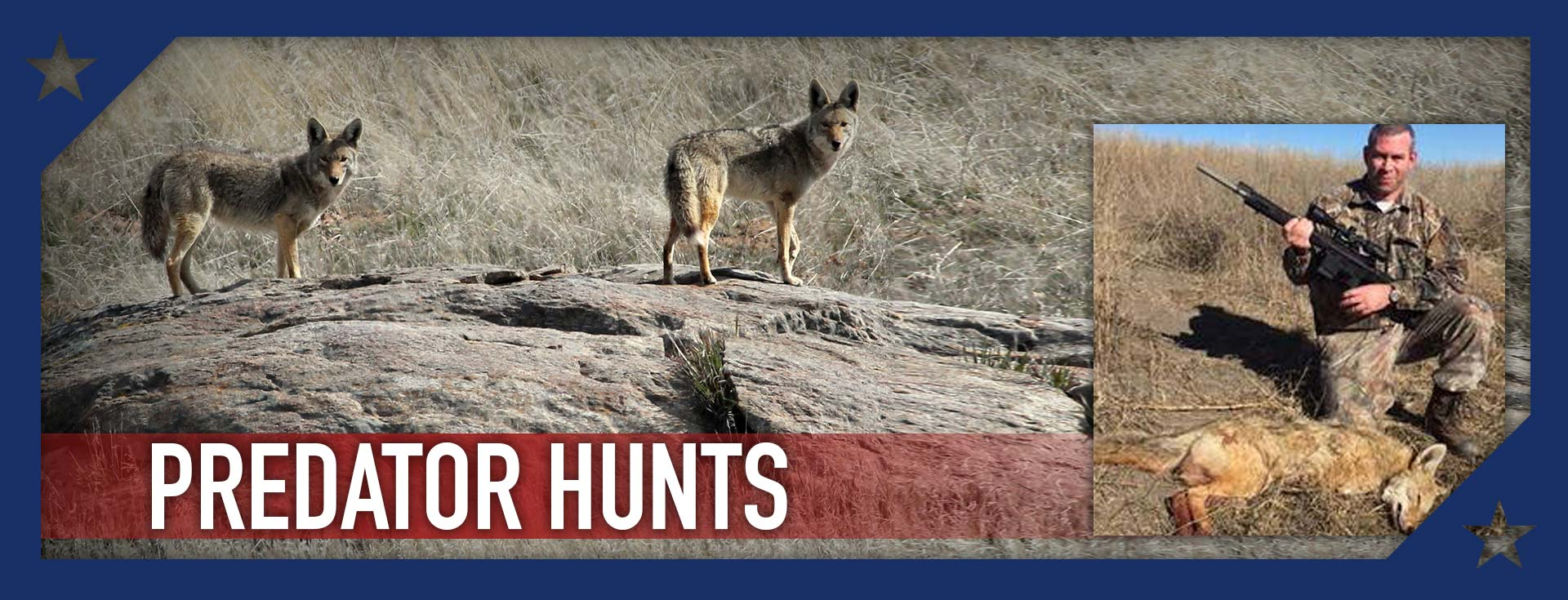Coyotes, Foxes, Mountian Lions and More